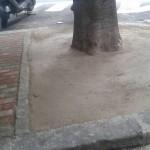 Alberi affogati nel cemento a San Teodoro