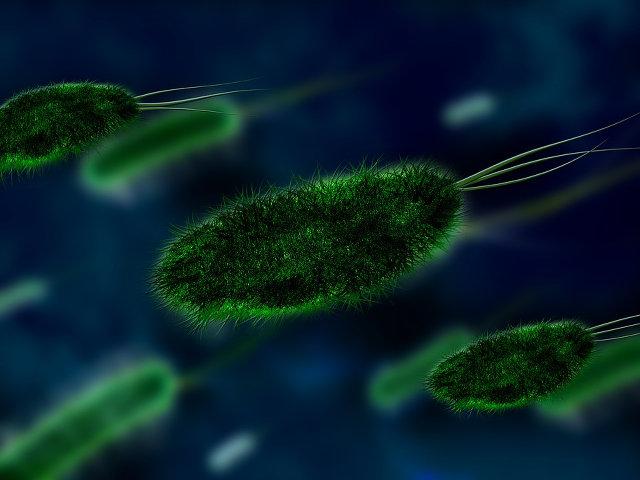 Usa | batterio resiste tutti antibiotici