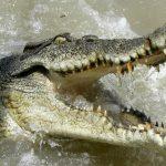Australia, bagno di notte in tragedia: donna uccisa da coccodrillo