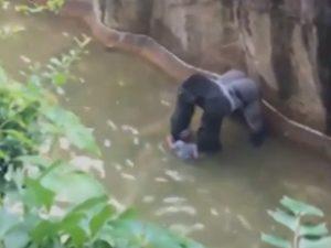 Gorilla ucciso a Cincinnati