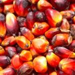 "Olio vegetali, Efsa: ""Olio di palma e margarine dannosi per salute"""