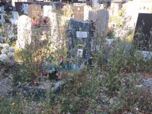 erbacce tra le tombe a Staglieno