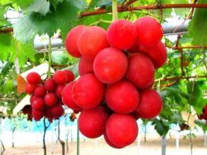 Un grappolo d'uva venduto a 10mila euro