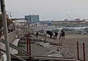 cavalli sulla spiaggia di Voltri