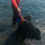 Voltri – Cane bagnino salva turista in difficoltà