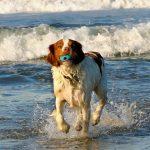 Vesima – Allarme spugne fritte per cani in spiaggia: una bufala