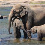 Kenya – Turista italiano muore schiacciato da elefante