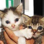 Savona – Raccolta di cibo per gli animali abbandonati al Gabbiano
