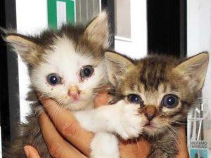 I due gattini ancora senza padroni