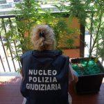 Marijuana contro il mal di schiena: piante sequestrate ad ultrasettantenne