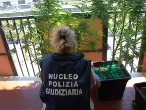 Anziana coltiva marijuana sul terrazzo