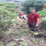 Finale Ligure, cane intrappolato in lacci per cinghiali salvato dai Vigili del Fuoco