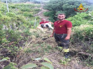 Nella foto, il cane salvato dai Vigili del Fuoco