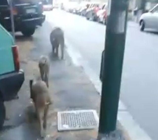 Genova, fuga di gas in via Anfossi a Pontedecimo