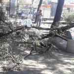 San Fruttuoso – Crolla ramo d'albero nel parco dei bambini di Terralba