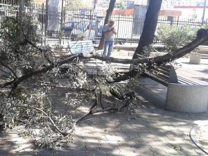 ramo crollato (foto Facebook)