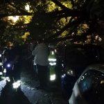 Sestri Ponente – Albero abbattuto sulle auto in via Vado