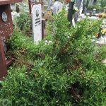 Voltri – Cimitero abbandonato e invaso dalle erbacce