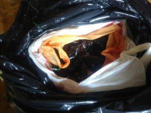 Nella foto, alcune delle cozze sequestrate dalla Guardia Costiera