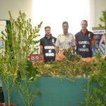 Savona, nascondeva piantagione di marijuana tra la vegetazione. Arrestato