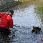 Vigili del fuoco salvano cane che sta per annegare in un canale
