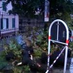 Castelletto – Albero abbattuto dal vento in corso Solferino