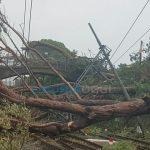 Nervi – Disastro ai Parchi, alberi abbattuti anche sulla Ferrovia