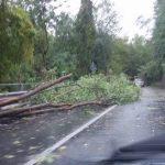 Maltempo in Liguria – Vento provoca danni, ferrovia Genova-La Spezia bloccata