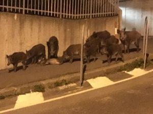 Esplosione in acciaieria a Verona, quattro feriti