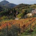 Agricoltura in Liguria, aumentano gli investimenti under 35: +117%