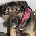 Savona – Il cane è malato e il padrone disoccupato. Raccolta fondi Enpa