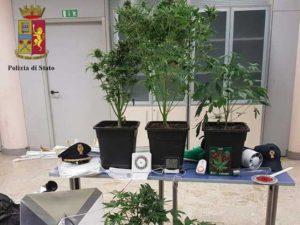 Cercano il ladro e trovano piantagione di marijuana