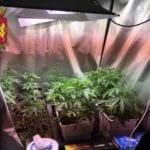 Genova, coltivava marijuana in soffitta. Un arresto nel centro storico