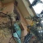Sciame di api sulla facciata di un palazzo a Oregina