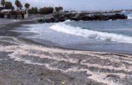 Dopo le velelle invasione di lumache di mare sulle spiagge di Genova