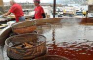 Sagra del Pesce di Camogli, grande successo per la 66esima edizione