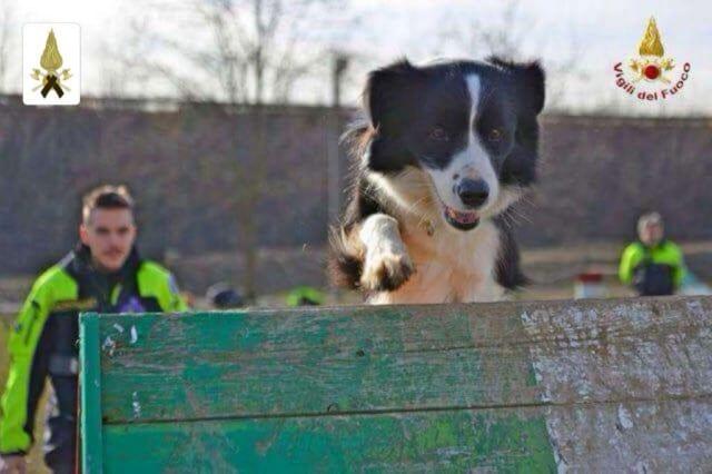 Cordoglio Vvf per morte del cane Camilla feritosi a Bergeggi