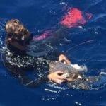 Tartaruga marina gravemente ferita recuperata nelle acque di Loano