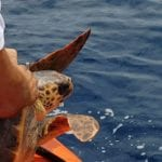 """Genova – Liberata """"Mirella"""" la tartaruga caretta-caretta curata all'Acquario"""