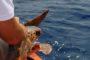 Paola Barale, foto in topless a Ibiza e scatta la querela