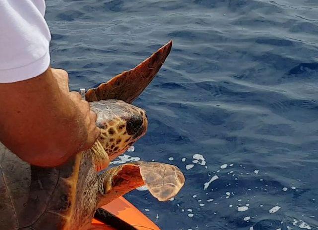 Genova - Oggi verranno liberate le  tartarughe curate dall'Acquario di Genova
