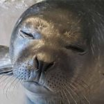 Genova, l'Acquario da il benvenuto ad un cucciolo di foca