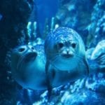 Acquario di Genova: finalmente il cucciolo di foca è visibile al pubblico