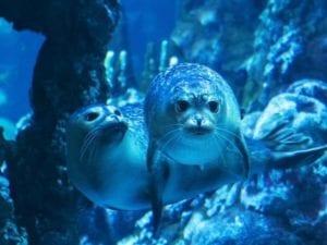 E' Pesto il nome della foca più