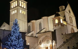 Assisi, acceso l'albero davanti alla Basilica di San Francesco. Viene dalla Val D'Aveto