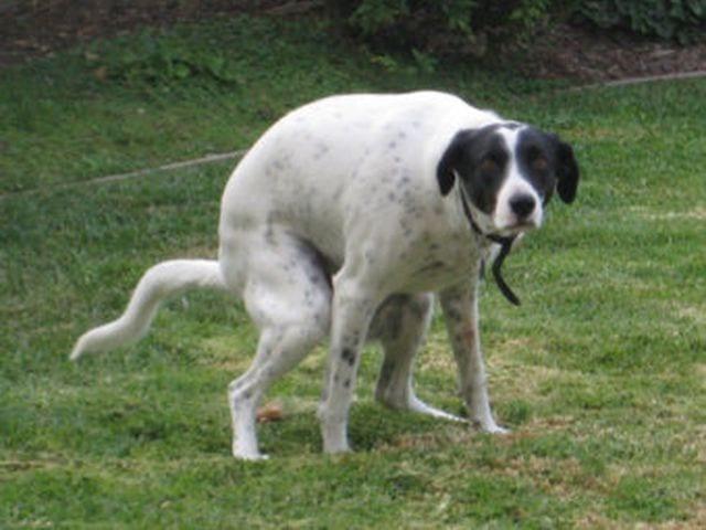 Carignano - Controlli e multe ai cani liberi a Villa Croce