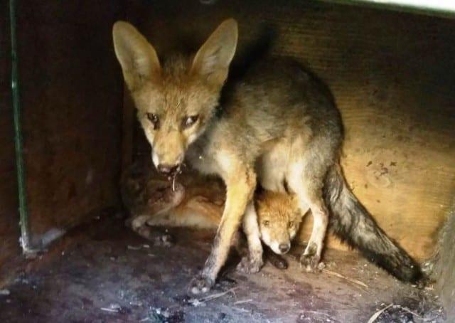Soccorso animali - L'Enpa chiede aiuto: salvati oltre 600 animali solo a giugno