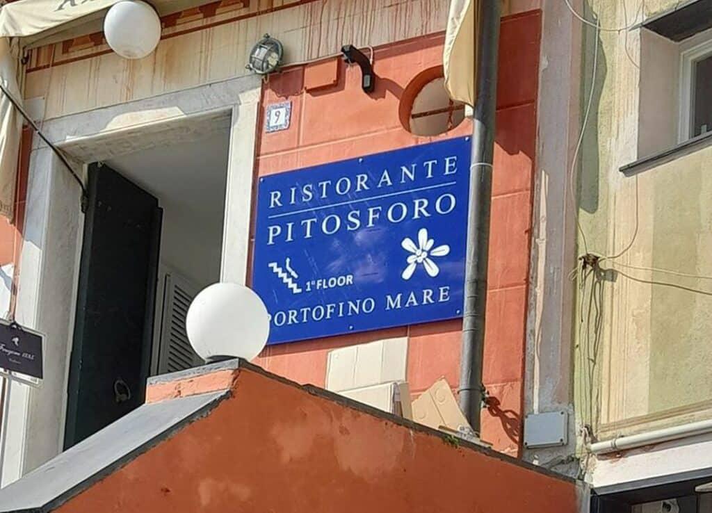 Pitosforo Portofino