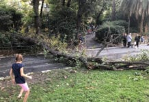 albero caduto villa Imperiale