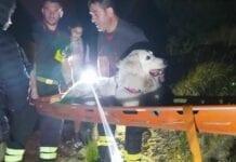 cane soccorso monte Rama